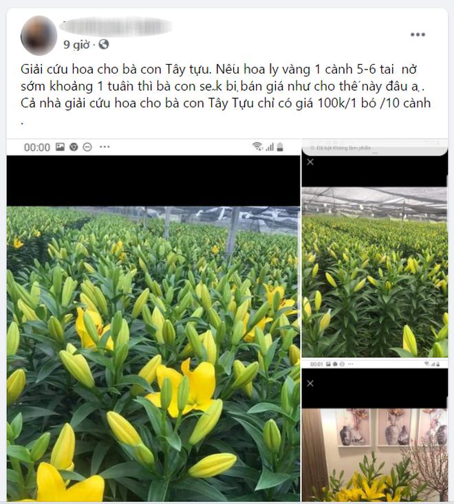 Hoa ly hàng xịn giảm giá sập sàn rẻ như rau, 7.000 đồng/cành sau Tết-2