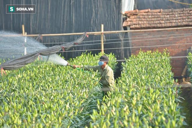 Hoa ly hàng xịn giảm giá sập sàn rẻ như rau, 7.000 đồng/cành sau Tết-5