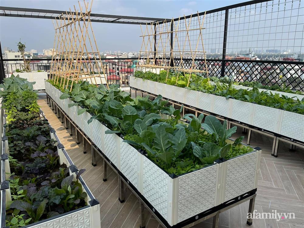 Sân thượng 83m² phủ kín rau quả sạch chỉ sau gần 1 tháng gieo trồng của cô giáo về hưu ở Hà Nội-1