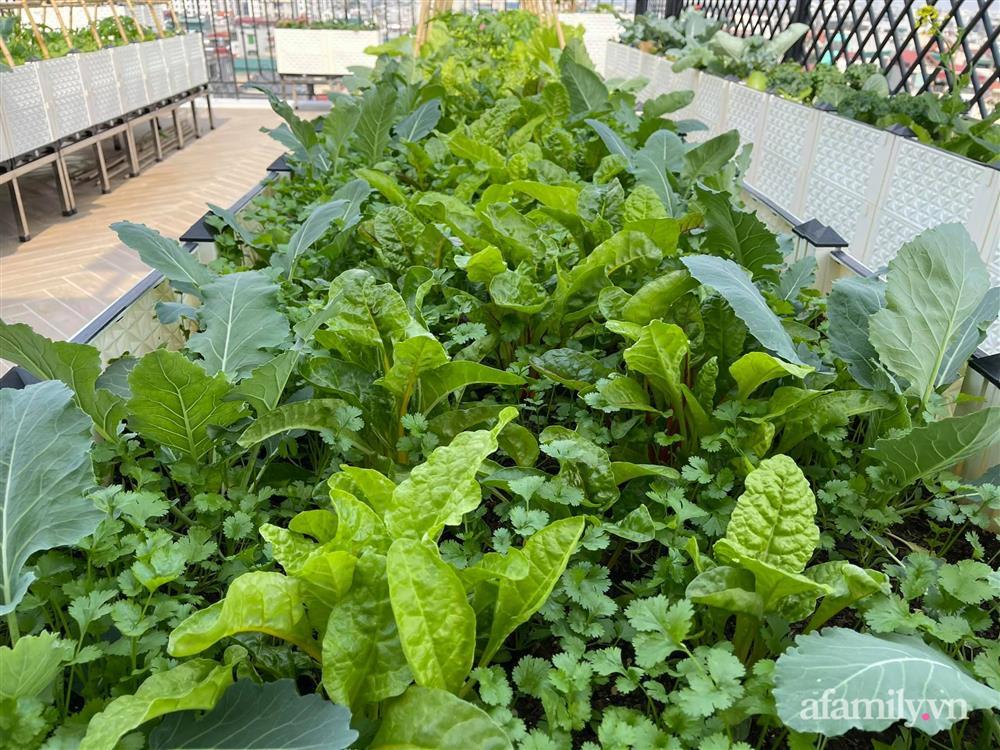 Sân thượng 83m² phủ kín rau quả sạch chỉ sau gần 1 tháng gieo trồng của cô giáo về hưu ở Hà Nội-4
