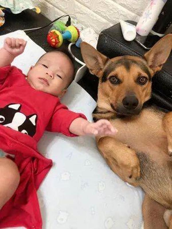 Bị biến thành bảo mẫu bất đắc dĩ cho cậu chủ nhỏ, vẻ mặt Tôi chán cái nhà này lắm rồi của chú chó vừa buồn cười vừa thương-2