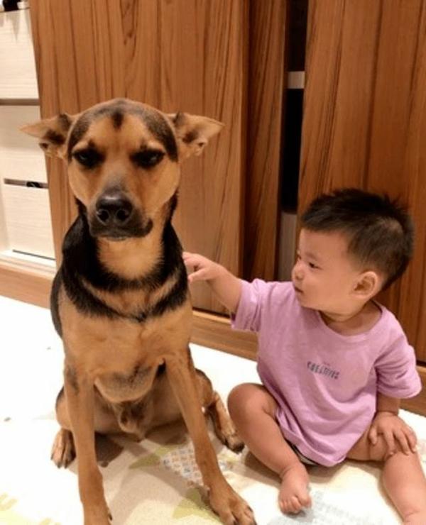 Bị biến thành bảo mẫu bất đắc dĩ cho cậu chủ nhỏ, vẻ mặt Tôi chán cái nhà này lắm rồi của chú chó vừa buồn cười vừa thương-3