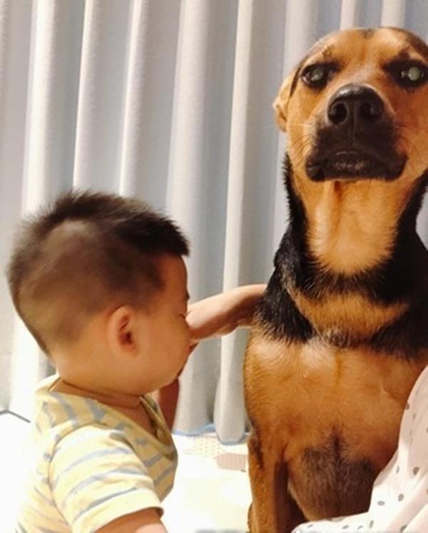 Bị biến thành bảo mẫu bất đắc dĩ cho cậu chủ nhỏ, vẻ mặt Tôi chán cái nhà này lắm rồi của chú chó vừa buồn cười vừa thương-4