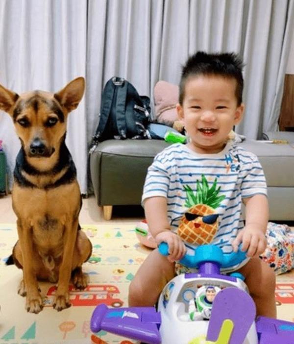 Bị biến thành bảo mẫu bất đắc dĩ cho cậu chủ nhỏ, vẻ mặt Tôi chán cái nhà này lắm rồi của chú chó vừa buồn cười vừa thương-5