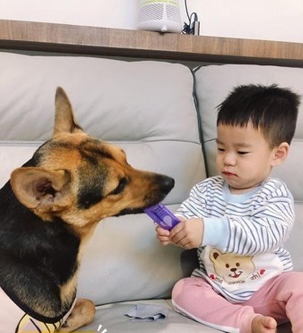 Bị biến thành bảo mẫu bất đắc dĩ cho cậu chủ nhỏ, vẻ mặt Tôi chán cái nhà này lắm rồi của chú chó vừa buồn cười vừa thương-7