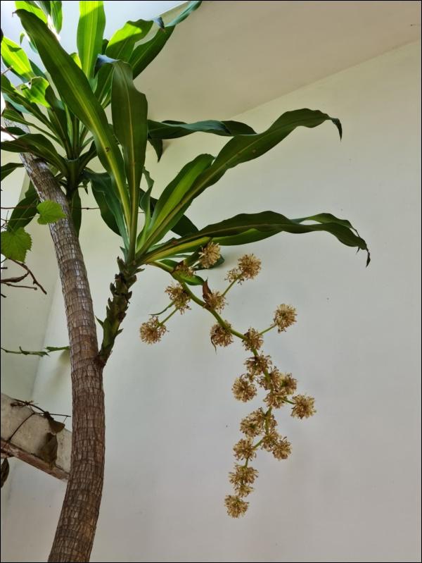 Nhà vườn hoành tráng của Người đẹp Tây Đô Việt Trinh qua Tết vẫn rộn ràng hoa trái, không gian đáng sống ai cũng mơ-7
