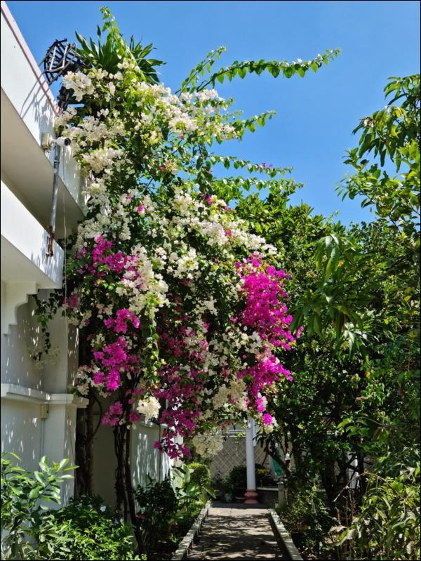Nhà vườn hoành tráng của Người đẹp Tây Đô Việt Trinh qua Tết vẫn rộn ràng hoa trái, không gian đáng sống ai cũng mơ-10