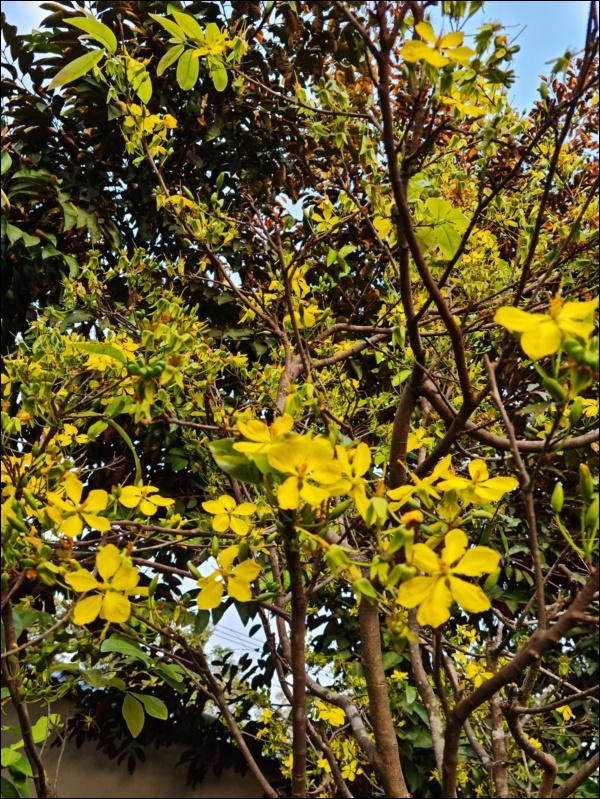 Nhà vườn hoành tráng của Người đẹp Tây Đô Việt Trinh qua Tết vẫn rộn ràng hoa trái, không gian đáng sống ai cũng mơ-9
