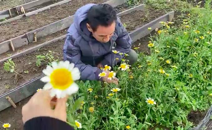 Khu vườn rộng lớn có cả loại ớt nửa tỉ đồng/1kg của Lý Hải - Minh Hà-10