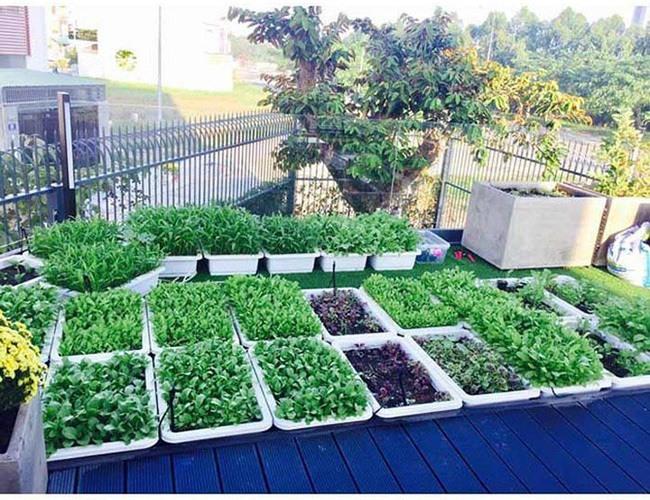 Khu vườn rộng lớn có cả loại ớt nửa tỉ đồng/1kg của Lý Hải - Minh Hà-13