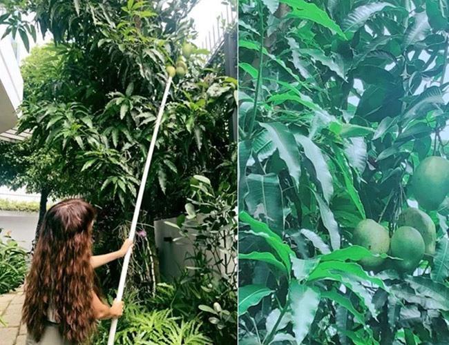 Khu vườn rộng lớn có cả loại ớt nửa tỉ đồng/1kg của Lý Hải - Minh Hà-14