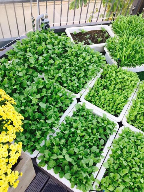 Khu vườn rộng lớn có cả loại ớt nửa tỉ đồng/1kg của Lý Hải - Minh Hà-16