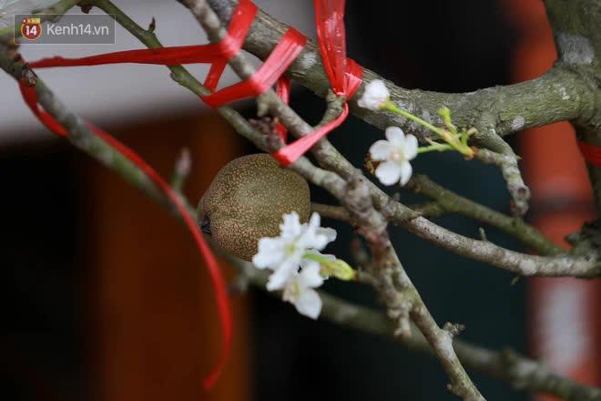Ảnh: Hàng trăm người dân Hà Nội đổ xô đi mua hoa lê về chơi Rằm tháng Giêng-2