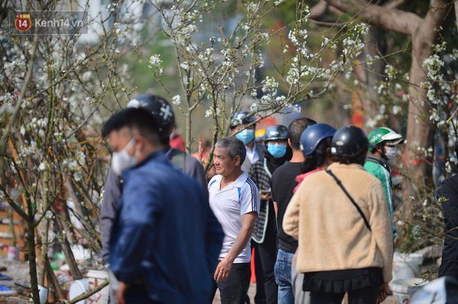 Ảnh: Hàng trăm người dân Hà Nội đổ xô đi mua hoa lê về chơi Rằm tháng Giêng-9