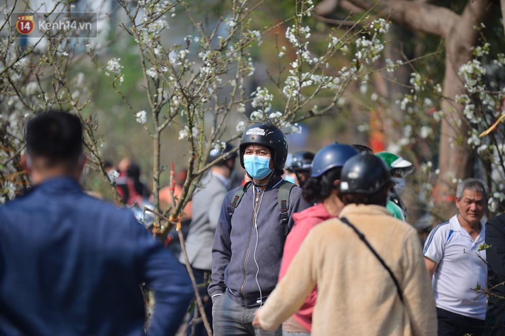 Ảnh: Hàng trăm người dân Hà Nội đổ xô đi mua hoa lê về chơi Rằm tháng Giêng-12