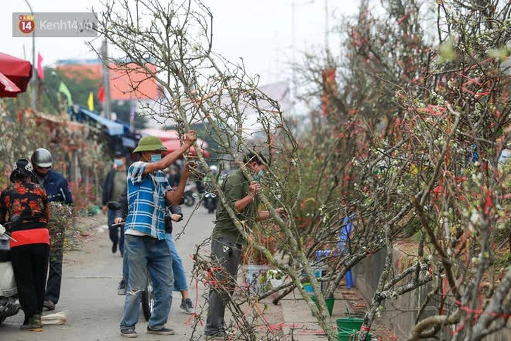 Ảnh: Hàng trăm người dân Hà Nội đổ xô đi mua hoa lê về chơi Rằm tháng Giêng-13
