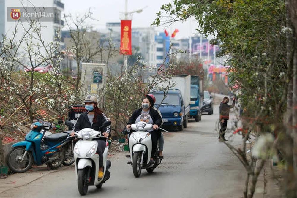 Ảnh: Hàng trăm người dân Hà Nội đổ xô đi mua hoa lê về chơi Rằm tháng Giêng-14