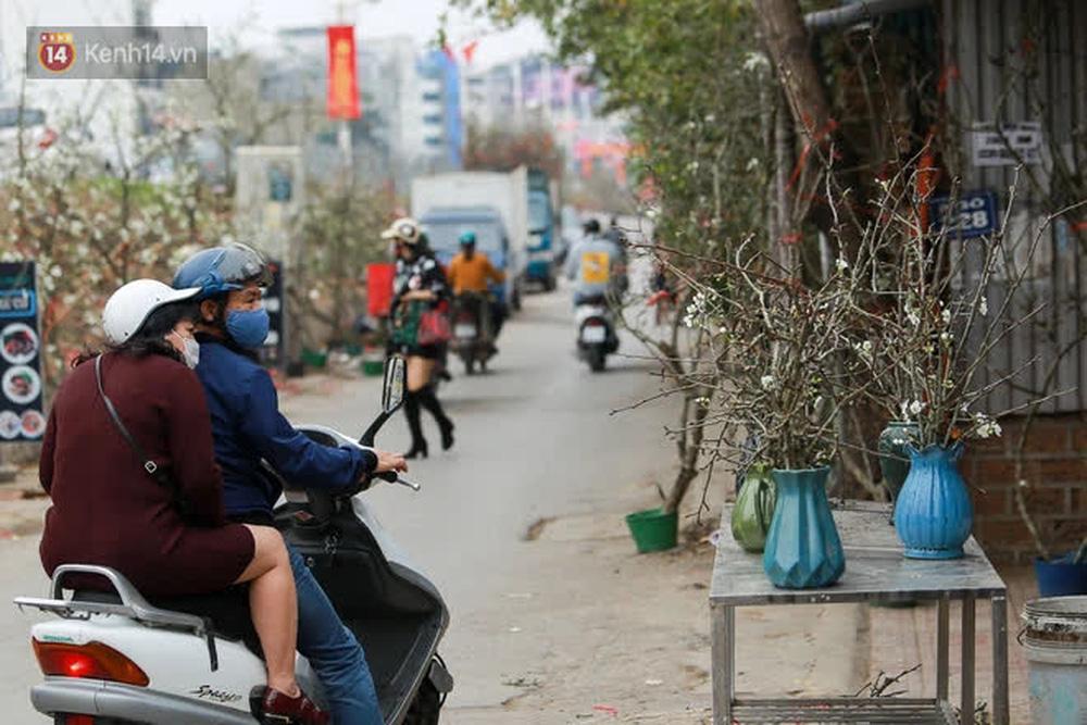 Ảnh: Hàng trăm người dân Hà Nội đổ xô đi mua hoa lê về chơi Rằm tháng Giêng-15