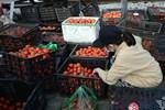 Hà Nội: Rau xanh rẻ như bèo, nông dân bỏ đầy đồng làm phân bón-11