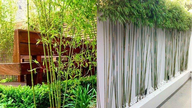 5 loại cây được các đại gia, người giàu chọn để trồng trước cửa nhà và tại sao họ có lựa chọn như vậy?-2