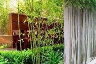 5 loại cây được các đại gia, người giàu chọn để trồng trước cửa nhà và tại sao họ có lựa chọn như vậy?