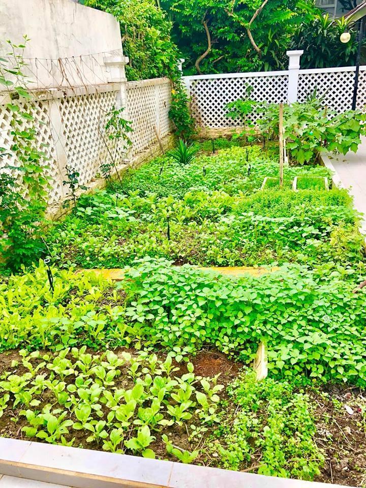 Khám phá khu vườn rộng 100m2 trong biệt thự của Thủy Tiên - Công Vinh-2