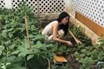Khám phá khu vườn rộng 100m2 trong biệt thự của Thủy Tiên - Công Vinh
