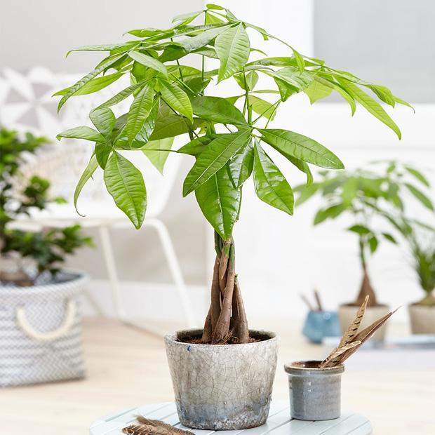 Muốn có tài lộc, may mắn, nhất định phải trồng 8 loại cây này trong nhà-5