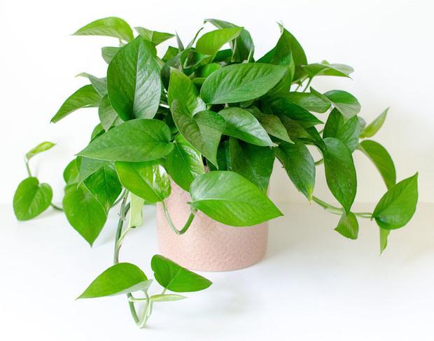 Muốn có tài lộc, may mắn, nhất định phải trồng 8 loại cây này trong nhà-7