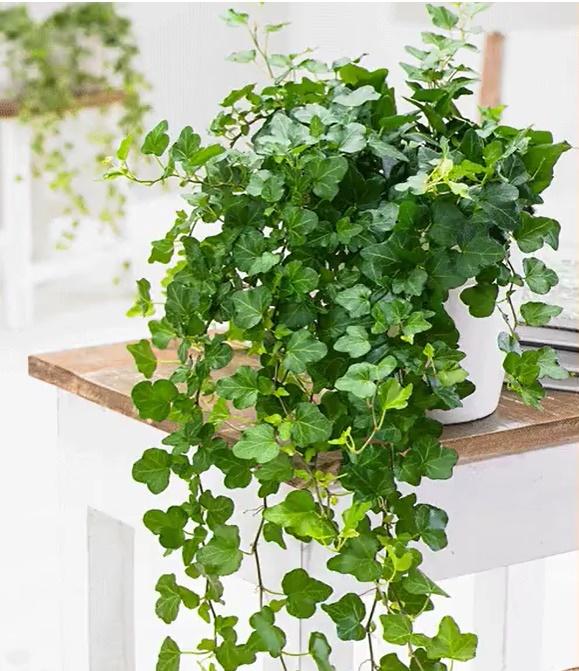 Muốn có tài lộc, may mắn, nhất định phải trồng 8 loại cây này trong nhà-8