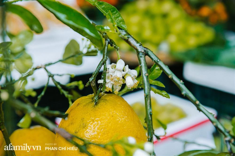 Hàng bưởi Diễn da vàng óng có từng búi hoa tươi giá tận 100k/quả, bà chủ thu cả chục triệu mỗi ngày!-3