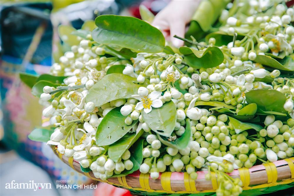 Hàng bưởi Diễn da vàng óng có từng búi hoa tươi giá tận 100k/quả, bà chủ thu cả chục triệu mỗi ngày!-15