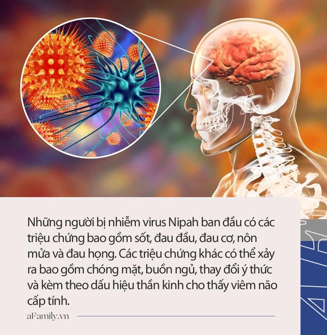 Virus Nipah gây phù não được cảnh báo có thể là đại dịch tiếp theo: Chưa có vắc-xin phòng bệnh và có thể ủ bệnh hơn 1 tháng-5