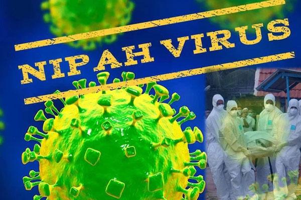 Virus Nipah gây phù não được cảnh báo có thể là đại dịch tiếp theo: Chưa có vắc-xin phòng bệnh và có thể ủ bệnh hơn 1 tháng