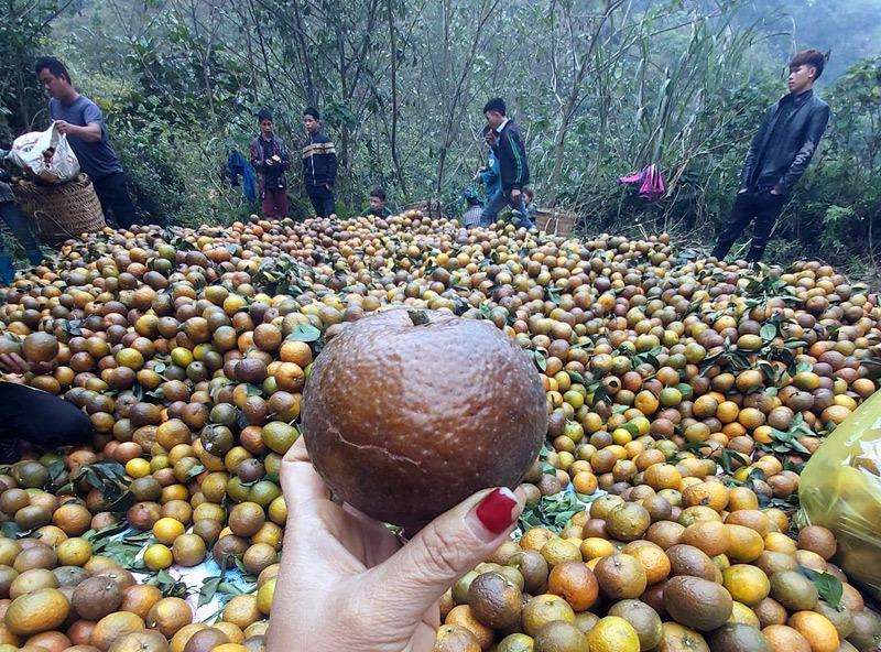 Cam sành Hà Giang siêu rẻ: 6 nghìn đồng/kg, mua cả yến vắt uống cả lít-1