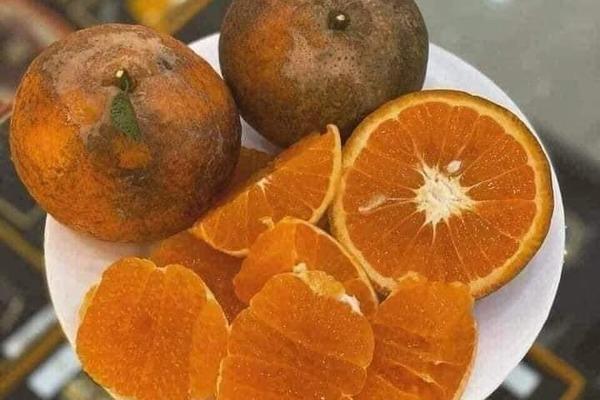 Cam sành Hà Giang siêu rẻ: 6 nghìn đồng/kg, mua cả yến vắt uống cả lít-4