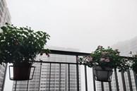 Dự báo thời tiết 1/3, miền Bắc mưa phùn kèm sương mù, trời rét