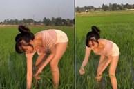 Đi dặm lúa để vòng 1 như rơi ra ngoài, bà Tưng 'ăn đá tảng'