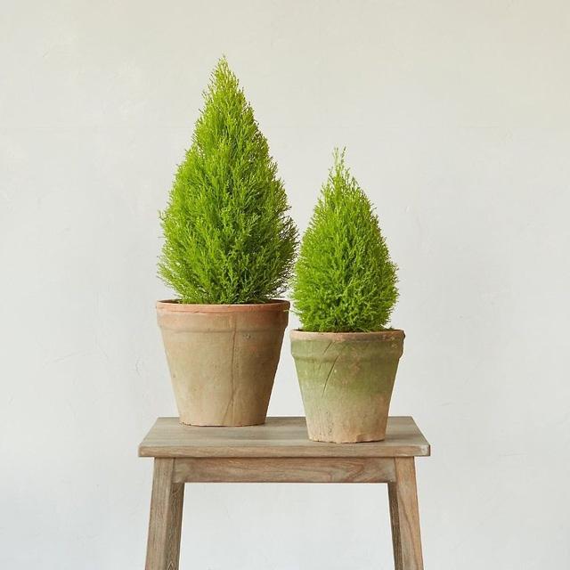 9 loại cây thanh lọc không khí trong nhà tốt nhất mà lại rất dễ trồng-1
