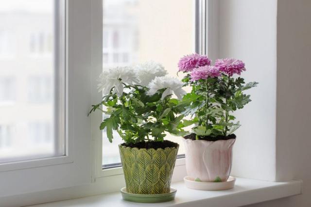 9 loại cây thanh lọc không khí trong nhà tốt nhất mà lại rất dễ trồng-2