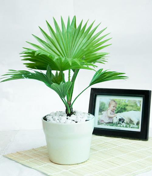 9 loại cây thanh lọc không khí trong nhà tốt nhất mà lại rất dễ trồng-4