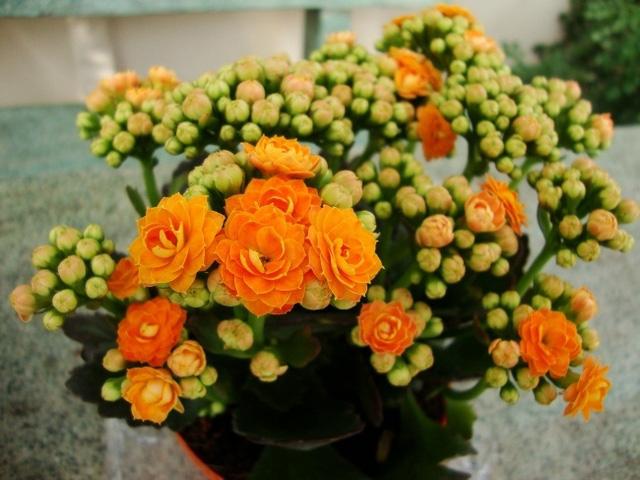 9 loại cây thanh lọc không khí trong nhà tốt nhất mà lại rất dễ trồng-5