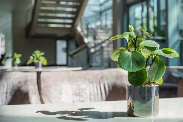 9 loại cây thanh lọc không khí trong nhà tốt nhất mà lại rất dễ trồng-6