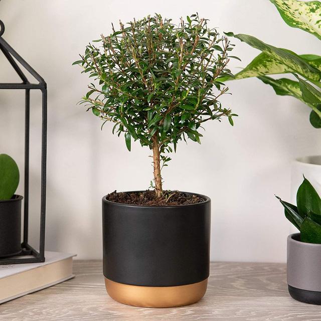 9 loại cây thanh lọc không khí trong nhà tốt nhất mà lại rất dễ trồng-7