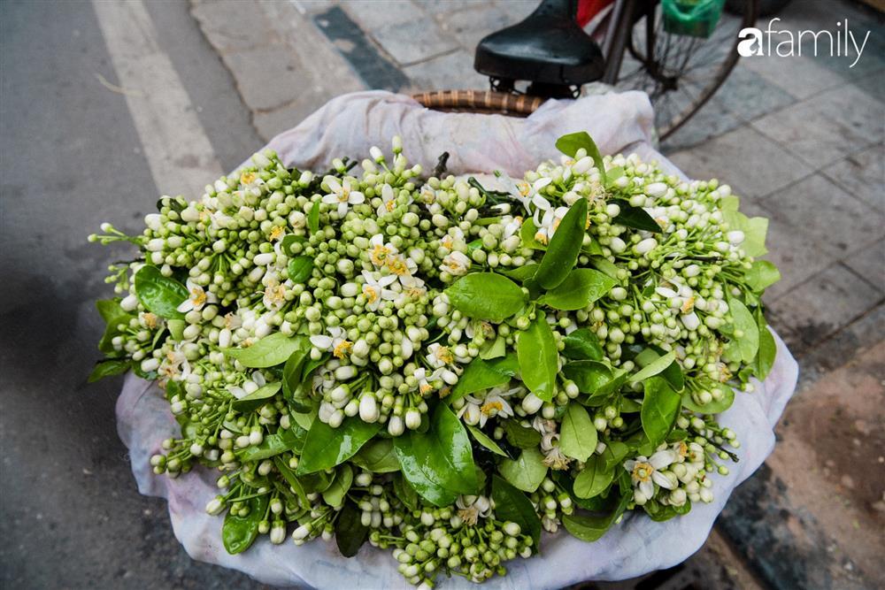 Vào mùa hoa bưởi thơm ngào ngạt, giá từ 200.000/kg và cách lựa hoa chuẩn chỉnh-7