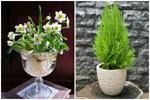 8 loại cây 'đẹp mà độc' không nên trồng trong nhà kẻo rước bệnh và vận xui vào người