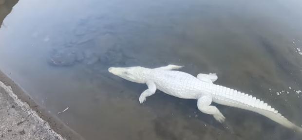 Nhóm thanh niên Hải Phòng gây phẫn nộ khi đăng clip ngược đãi động vật, sơn trắng cá sấu thành bạch tạng tiền tỷ để troll cho vui-1