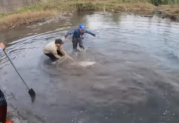 Nhóm thanh niên Hải Phòng gây phẫn nộ khi đăng clip ngược đãi động vật, sơn trắng cá sấu thành bạch tạng tiền tỷ để troll cho vui-2