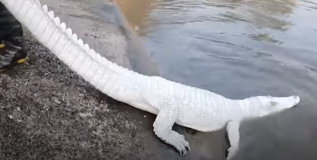 Nhóm thanh niên Hải Phòng gây phẫn nộ khi đăng clip ngược đãi động vật, sơn trắng cá sấu thành bạch tạng tiền tỷ để troll cho vui-3