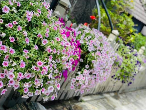 Biệt thự triệu đô hoành trángcủa Nhật Kim Anh: Bốnmùa ngập tràn hoa tươi từ nhà ra ngõ-8